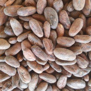 bolivia beans